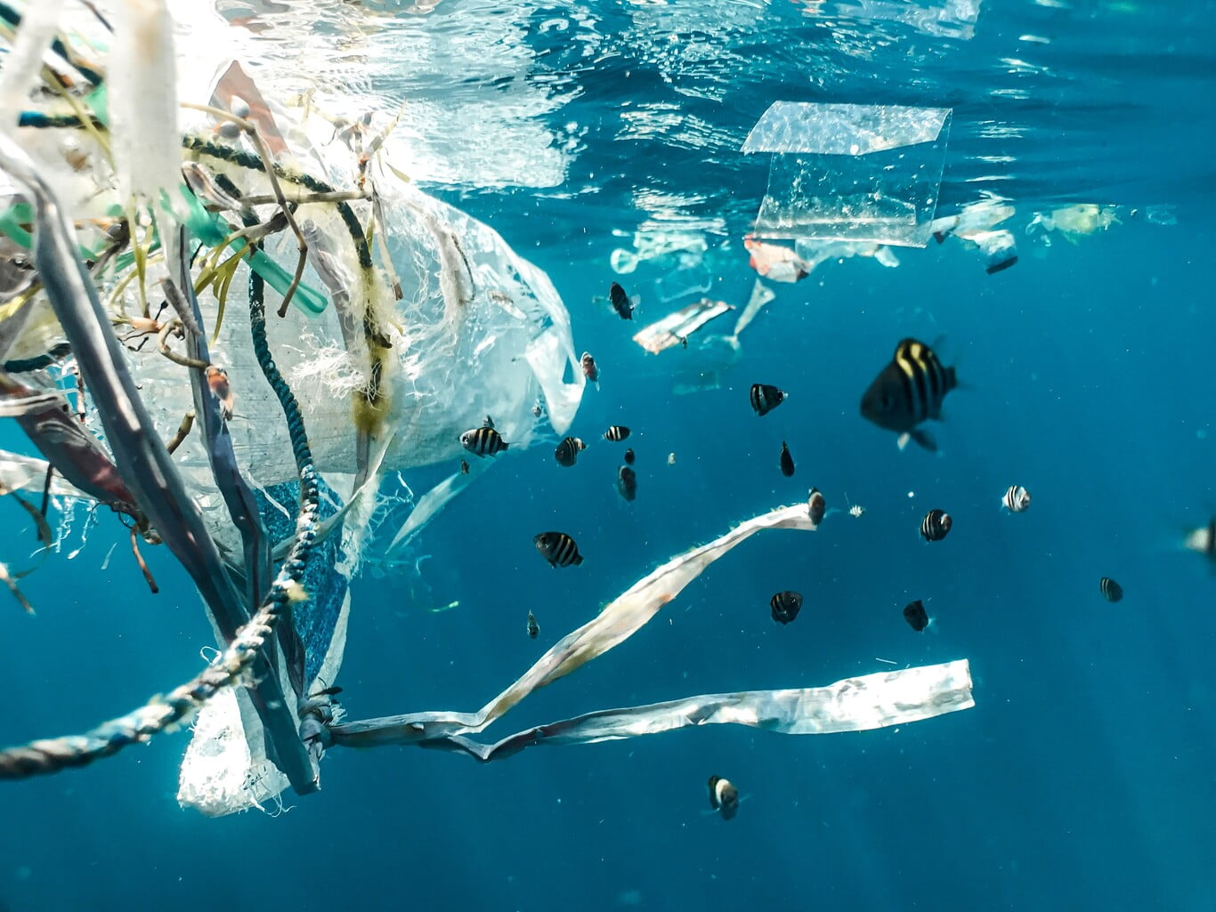 Eliminating plastic from our lives today is impossible: Scientists are looking for a way to make it less bad for the environment
